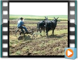 Rae Valley Heritage Association Video - Plowing With a Team of Two Mules