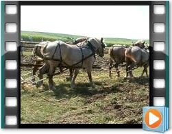 Rae Valley Heritage Association Video - Plowing With Teams of Horses